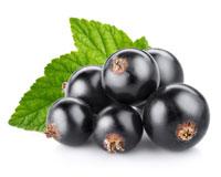ブラックカラント種子オイル
