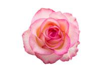 バラの葉エキスとローズ花びら